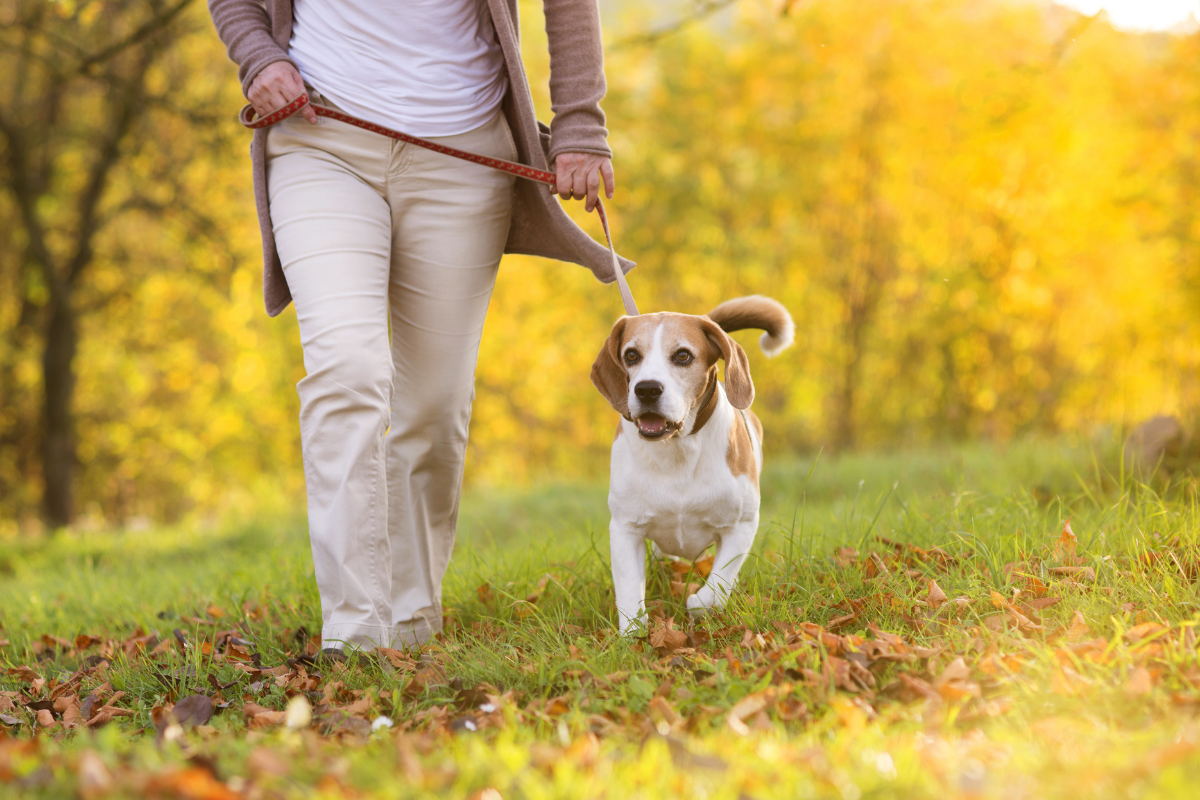 Dog friendly walking routes Bromsgrove, Worcestershire