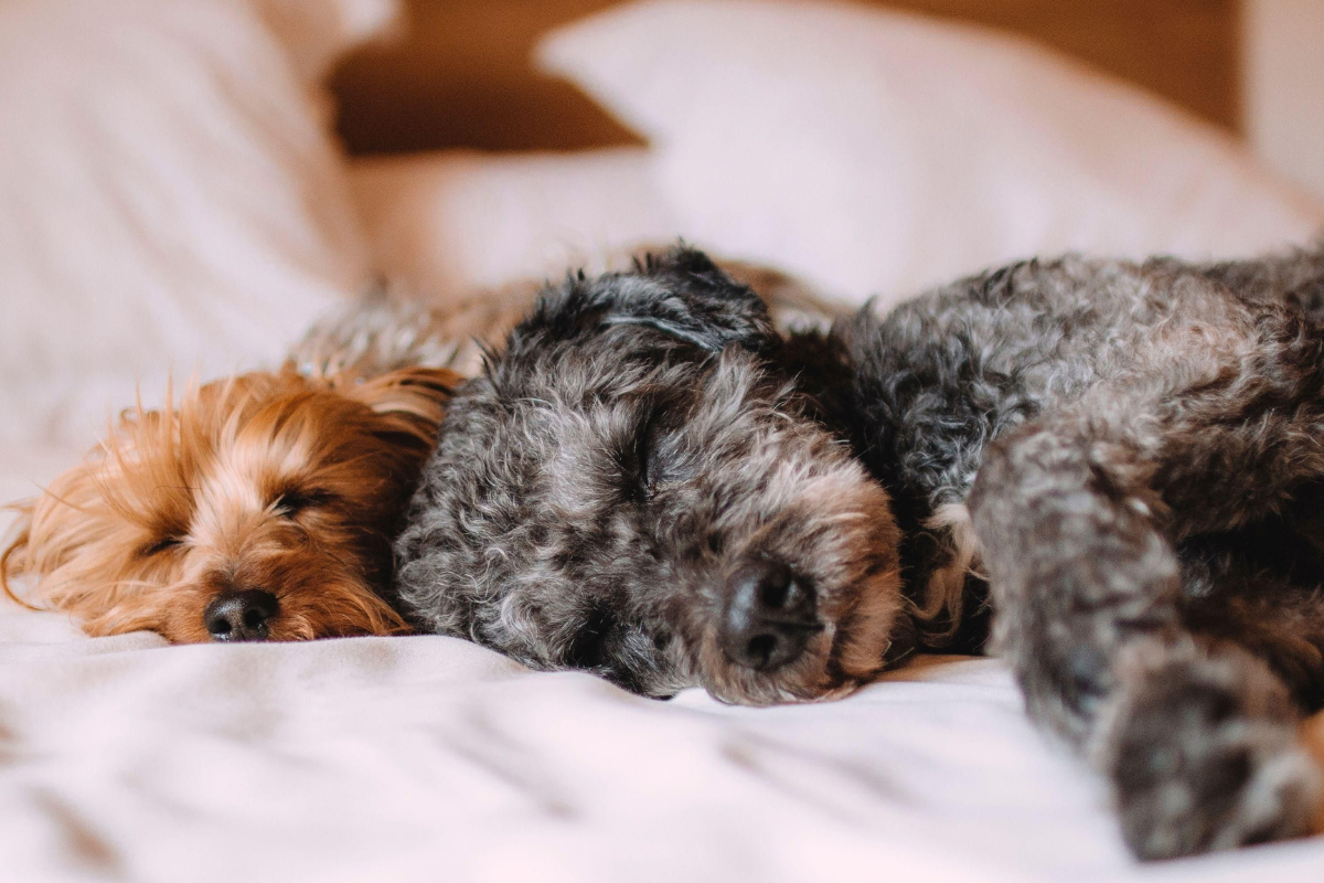 Dog Friendly hotel Bromsgrove, Worcestershire